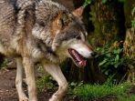 virus-corona-dari-kelelawar-ini-ragam-daging-esktrem-di-pasar-wuhan-ada-serigala-hingga-landak.jpg
