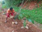 warga-menanam-pohon-pisang-di-jalan-kabupaten.jpg
