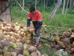 warga-saat-mengupas-buah-kelapa.jpg