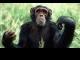 simpanse.jpg