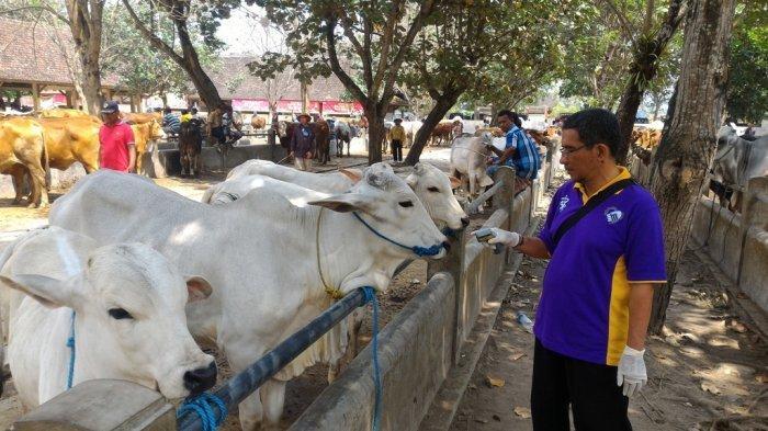 Hewan kurban sapi untuk Idul Adha 2021