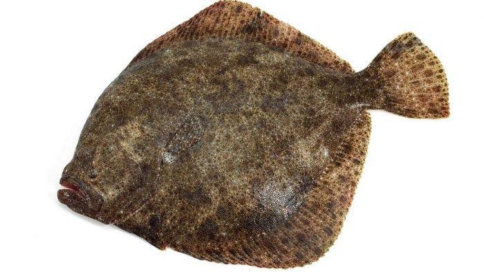 Mengenal Ikan Turbot Berharga Fantastis yang Dieksekusi di Pressure Test MasterChef Indonesia