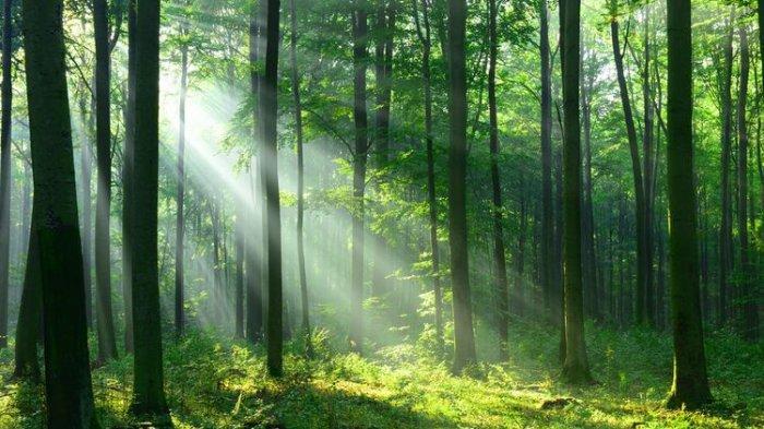 Ditemukan dalam Kondisi Haus dan Lapar, Ini Alasan Guru di NTT Masuk ke Hutan Hingga Tersesat 3 Hari