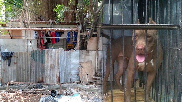 Bocah di NTT Tewas setelah Digigit Anjing Rabies yang Akhirnya Dimakan Keluarganya, Sempat Takut Air