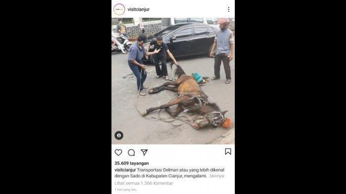 Video Viral Kuda Terkapar Malah Dipukuli, Ternyata Fakta Tak Demikian, Pemilik Ceritakan Kronologi
