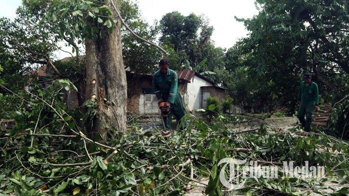 Berita Foto: Dinas Kebersihan dan Pertamanan Pangkas dan Tebang Pohon Keropos di Medan - 04020202_pangkas_pohon_danil_siregar-2.jpg