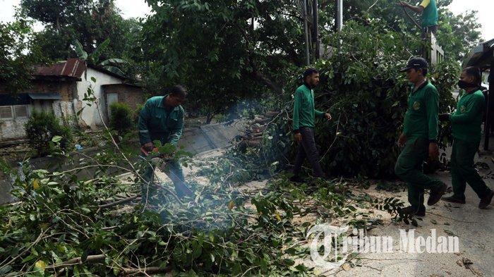 Berita Foto: Dinas Kebersihan dan Pertamanan Pangkas dan Tebang Pohon Keropos di Medan - 04020202_pangkas_pohon_danil_siregar-4.jpg