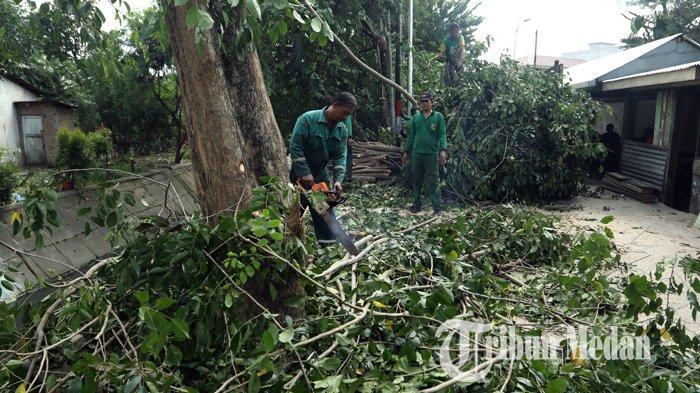 Berita Foto: Dinas Kebersihan dan Pertamanan Pangkas dan Tebang Pohon Keropos di Medan - 04020202_pangkas_pohon_danil_siregar.jpg