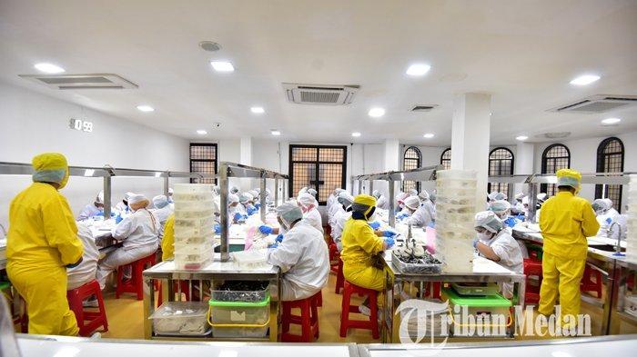 Pekerja melakukan proses produksi sarang burung walet sebelum di ekspor, di MMTC, Medan, Sabtu (7/11/2020). Ekspor sarang burung walet Indonesia selama tahun ini diperkirakan mengalami kenaikan 15 hingga 20 persen selama pandemi Corona. TRIBUN MEDAN/DANIL SIREGAR