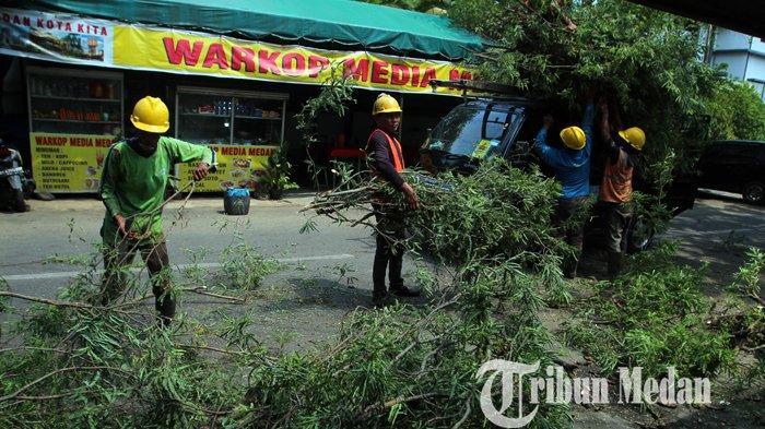 Berita Foto: Antisipasi Gangguan, PT PLN Memangkas Ranting Pohon Mencegah Korsleting Listrik