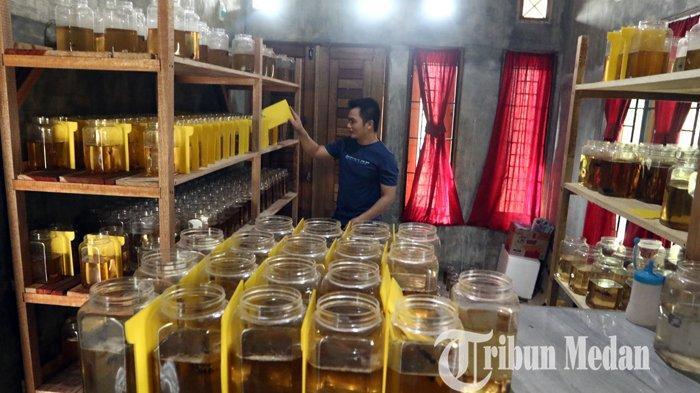 Kevin menyusun ikan cupang hias miliknya hasil budidaya di kediamannya, Binjai, Minggu (14/3/2021). Budidaya berbagai jenis ikan cupang hias di tempat tersebut mengalami peningkatan penjualan di saat pandemi Covid-19, dengan harga jual Rp 100 ribu hingga jutaan rupiah per ekor.