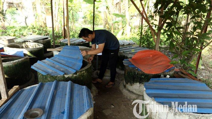 Kevin menyortir anakan ikan cupang hias yang siap dibesarkan di kediamannya, di Binjai, Minggu (14/3/2021). Budidaya berbagai jenis ikan cupang hias di tempat tersebut mengalami peningkatan penjualan di saat pandemi Covid-19, dengan harga jual Rp 100 ribu hingga jutaan rupiah per ekor.