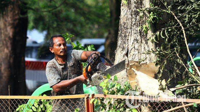 Berita Foto: Pemangkasan Pohon untuk Mencegah Pohon Tumbang Akibat Terpaan Angin Kencang - 20082019_pangkas_pohon_danil_siregar-2.jpg