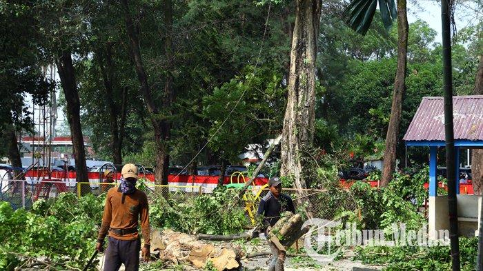 Berita Foto: Pemangkasan Pohon untuk Mencegah Pohon Tumbang Akibat Terpaan Angin Kencang - 20082019_pangkas_pohon_danil_siregar.jpg