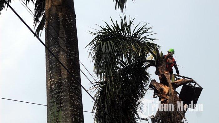 Berita Foto: PT PLN Rutin Memangkas Ranting Pohon yang Dinilai Rawan Menyentuh Kabel Listrik - 21042020_pangkas_ranting_pohon_danil_siregar-3.jpg