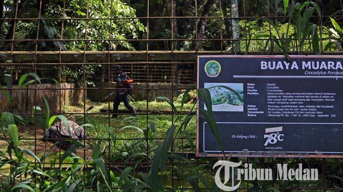 Lebih Dari Tiga Bulan Tutup, Pihak Medan Zoo Sering Ditanyai Pelanggan Kapan Mulai Buka
