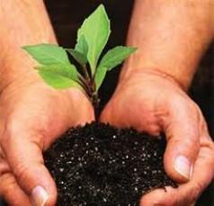 Materi Belajar IPA Kelas 8: 5 Organ Penting Pada Tumbuhan Serta Fungsinya
