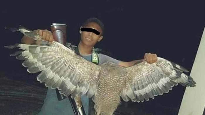 Polisi Berhasil Tangkap Pemuda Pamer Foto Panggang Daging Elang Bido Satwa Dilindungi