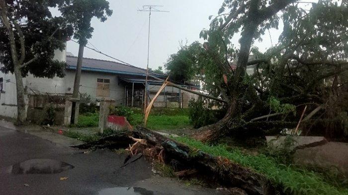 Hujan dan Angin Kencang di Siantar, Pohon Hingga Papan Bunga di Jalanan Tumbang