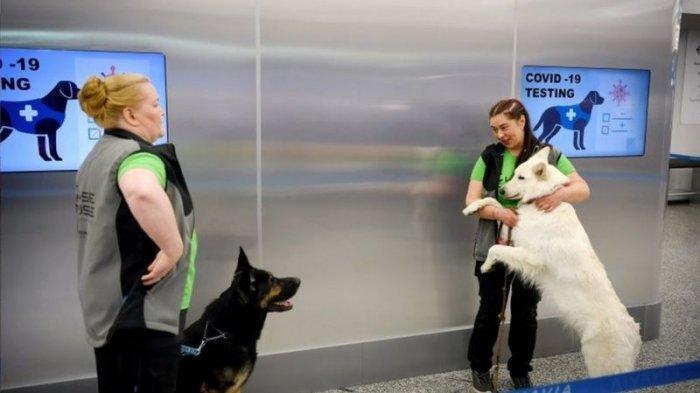 Anjing yang diuji coba melacak orang terinfeksi COVID-19 di Bandara Helsinki