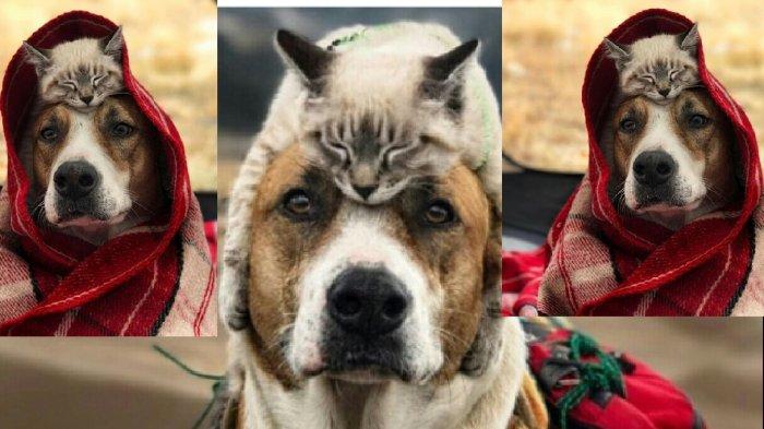 Gemar Travelling Bareng Kucing Dan Anjing Ini Viral Berikut Foto Foto Kebersamaannya Tribun Medan