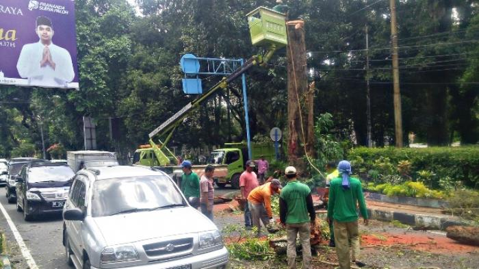 Penebangan Pohon, Arus Lalu Lintas di Jalan Sudirman Terganggu