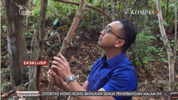 PENAMPAKAN Bajakah Tumbuhan Penyembuh Kanker yang Dianggap Mistis oleh Suku Dayak, Ini Videonya