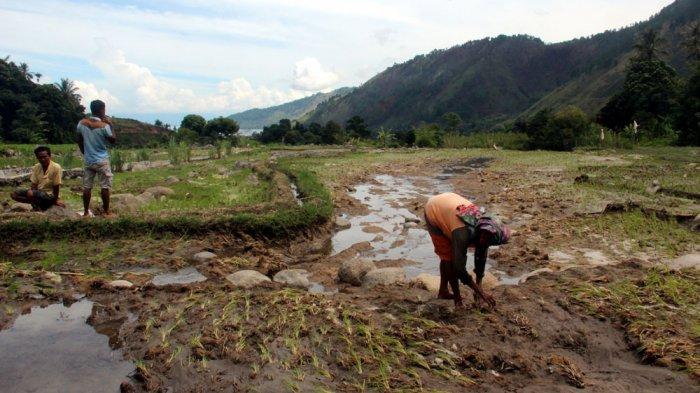 Banjir Rusak Tanaman Petani di Bakkara, Diduga Ini Menjadi Penyebabnya