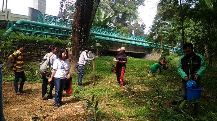 Puluhan Relawan Tanam Ratusan Bibit Pohon di Bantaran Sungai Babura
