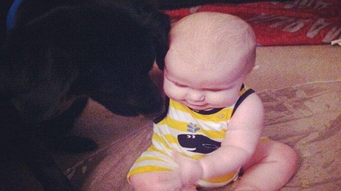 berkat anjing, pasutri ini tahu tindakan kejam pengasuh bayinya