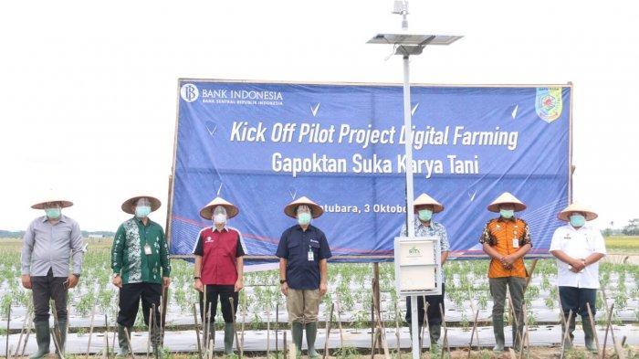 BI Sumut Lakukan Percontohan Digitalisasi Pertanian Cabai Merah di Lubuk Cuik