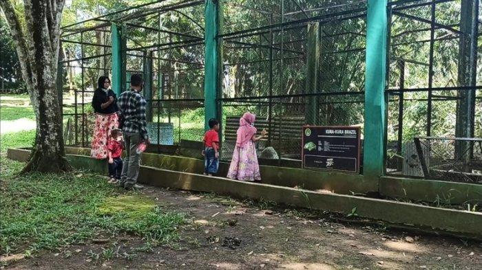 BREAKING NEWS: Jalan ke Berastagi Macet, Pengunjung Jadikan Medan Zoo Jadi Alternatif Liburan