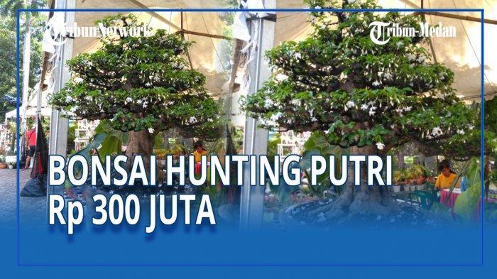TANAMAN TERMAHAL, Bonsai Hunting Putri Dibanderol Rp 300 Juta karena Berumur 30 Tahun