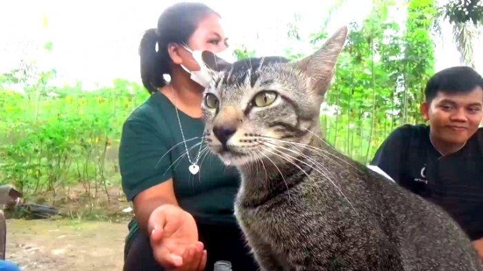 Aneh dan Ajaib, Kucing Kampung di Asahan Konsumsi Balsem Sebelum Tidur