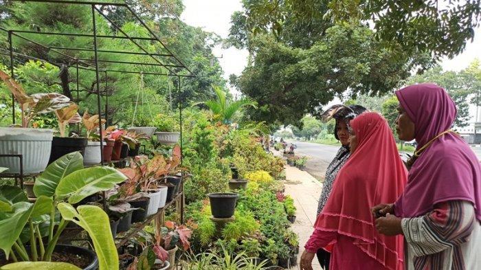 Tren Koleksi Bunga Meningkat di Medan, Monstera Paling Banyak Diburu, Capai Harga Jutaan Rupiah