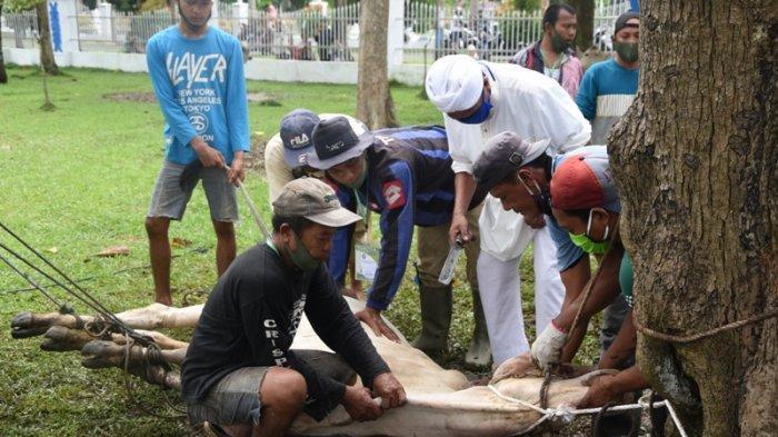 PANITIA kurban di kantor Bupati Deliserdang melakukan penyembelihan sapi, Jumat (31/7/2020).