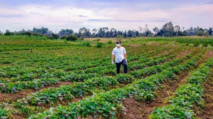 Kagumi  Potensi Alam Sidikalang, Camat Dorong Petani Terapkan Jurus Digital Raup Untung Lebih Besar