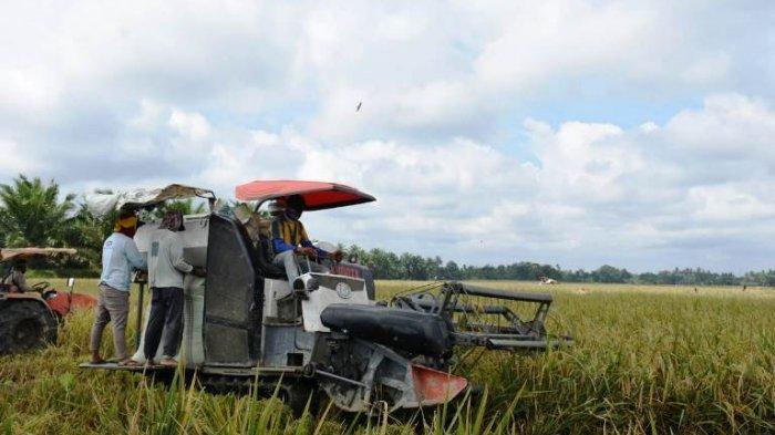 Petani Sergai Keluhkan Kelangkaan Pupuk Subsidi, Ini Penjelasan Dinas Pertanian!
