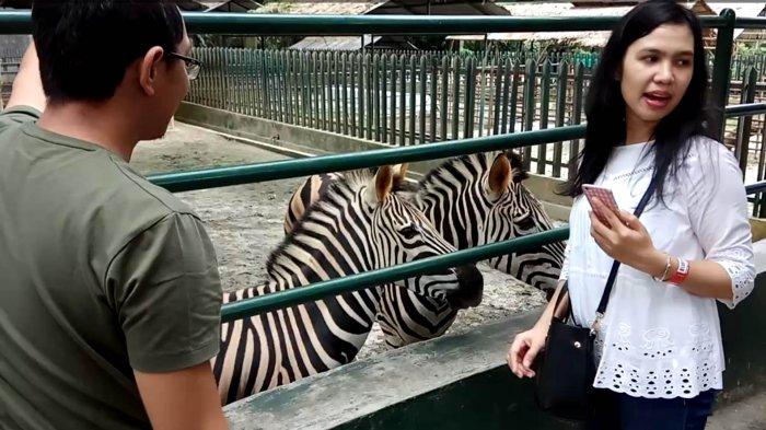 Wisata ke Taman Hewan Pematangsiantar, Satu di Antara yang Terbaik di Indonesia
