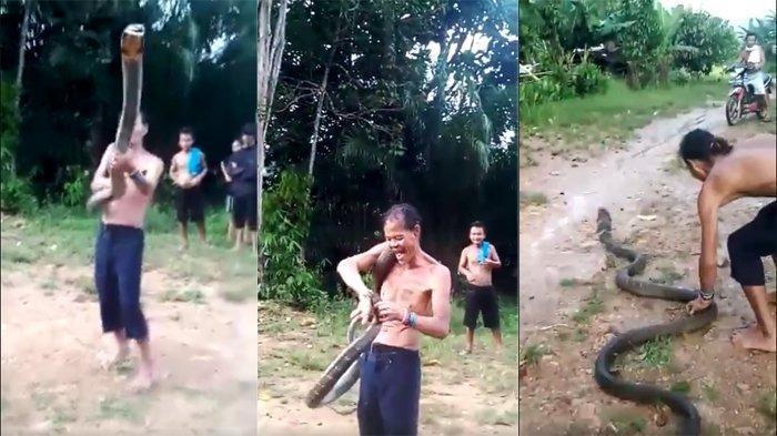 VIRAL Dukun Tewas setelah Beratraksi dengan Ular King Kobra 5 Meter, Sempat Tertawa dan Pukul Ular