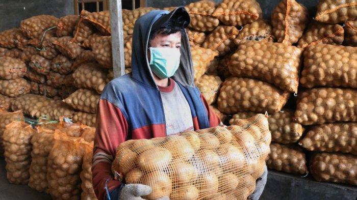 Lima Tahun Terakhir, Produktivitas Pertanian di Samosir Alami Peningkatan