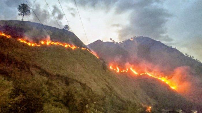 Hutan Kaldera Toba di Silahisabungan Terbakar Lagi, Luas Mencapai Enam Hektare