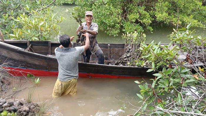 Penanaman Bibit Mangrove, Untungkan Masyarakat secara ekonomi dan Selamatkan Biota Laut