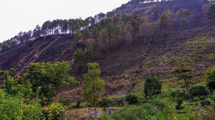 Kebakaran Hutan Kaldera Toba Kembali Terjadi di Dairi, Warga Minta Polisi Kejar Pelakunya