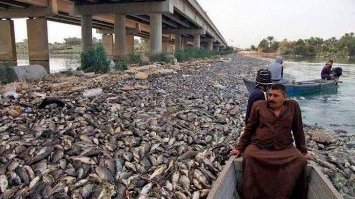 Sungai Eufrat Dipenuhi Bangkai Ikan Mas, Petani Belum Tahu Penyebab Kematian