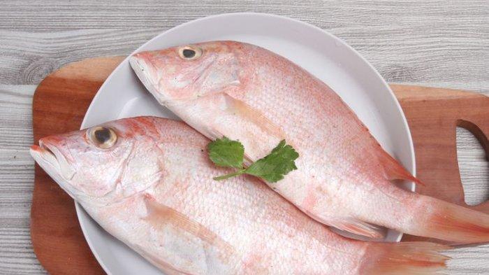 Cara Mengolah Ikan Kakap Segar Sebelum Dimasak agar Tidak Bau