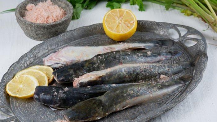 Cara Mengolah Ikan Lele agar Tidak Bau Amis dan Berlendir
