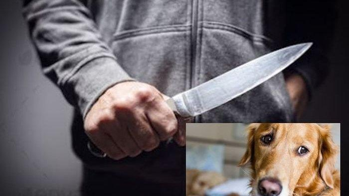 Misteria Dua Orang Pria Berhelm Teror Rumah Pejabat Kejaksaan Pakai Kepala Anjing dan Pisau