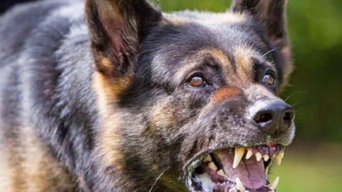 Tips Penanganan Pertama Digigit Anjing Rabies
