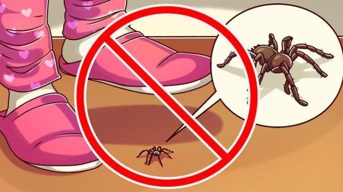 Jangan Bunuh 10 Jenis Serangga Berikut, Miliki Manfaat Besar untuk Manusia, Satu di Antaranya Kepik